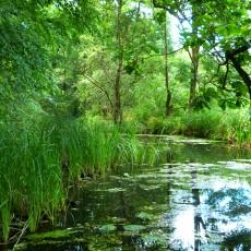 Fließ nahe der Wasserburger Spree im Unterspreewald