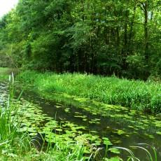Natur im Spreewald
