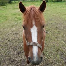 In Köthen sind überall Pferde...