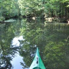 Mit dem Kanu im Unterspreewald